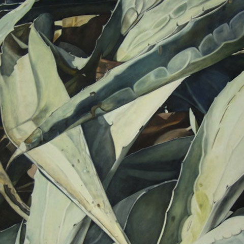 agave deserti 2012 80x120cm oil/canvas