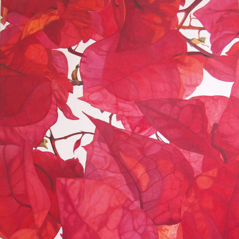 bougainvillea 2013 100x100cm oil/canvas