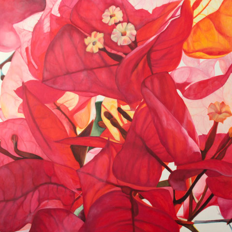 bougainvillea VIII 2016 60x70 oil/canvas