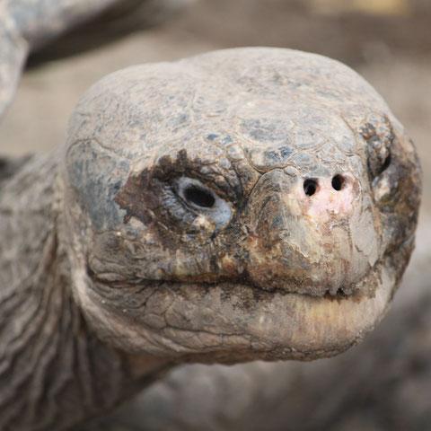 Das Lächeln auf den Galápagos Inseln