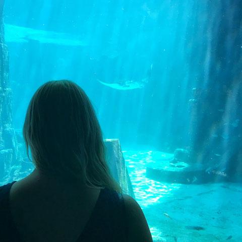 Im Atlantis Aquarium