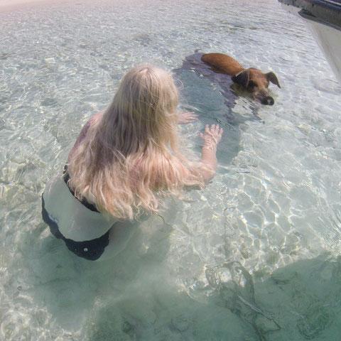 Baden mit Schweinen auf Big Major Cay