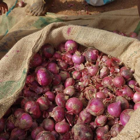 Zwiebeln für den Weiterverkauf