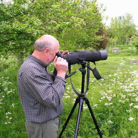 Storchenvater beim Beobachten der Störche