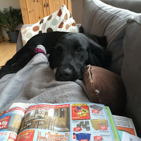Jetzt bin ich total müde und chill ein wenig mit Frauchen auf dem Sofa