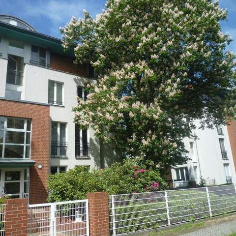 Eigentumswohung Charlottenburg Westend Verkauf 2016