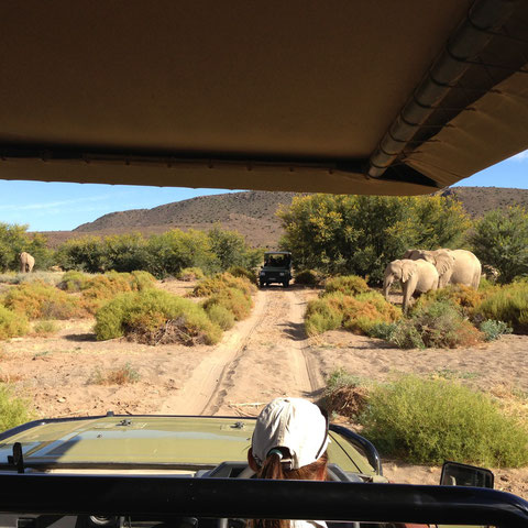 Sambona Safari