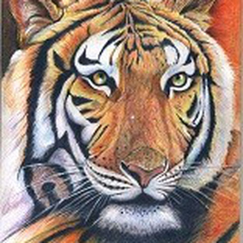 Tiger 30x21 Buntstift 3. 2010