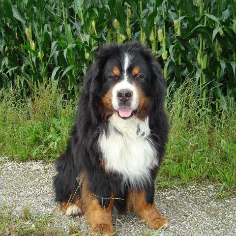 Um Baro seinen besonderen Namen zu geben, stand ein anderer Hund Pate