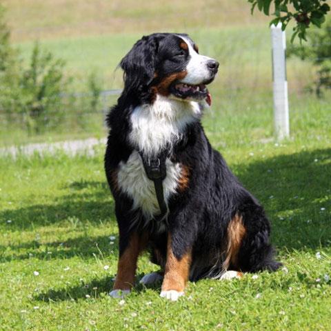 Vom Namen her wäre Limbo der Star jeder Dog-Dancing-Show
