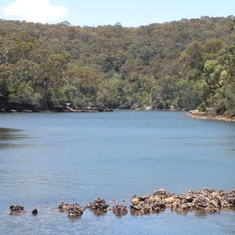 Im Royal Nationalpark bei Sydney