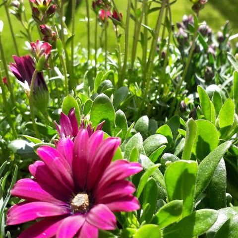 Barbara Schätzke Naturmeditation Blume