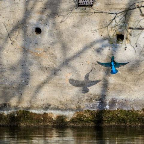 Eisvogelwand © Robert Hoiss