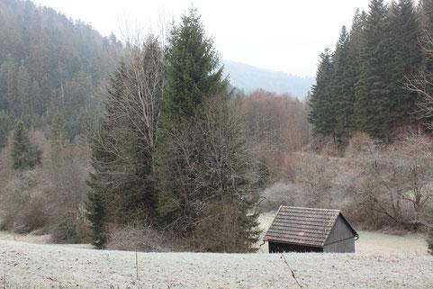 oberhalb der Fischzucht bei Calmbach (G. Franke, 04.12.2016)
