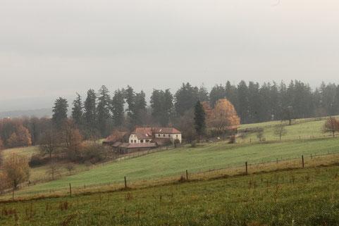wieder sind wir oberhalb des Metzlinschwander Hofes (G. Franke, 27.11.16)