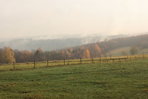 Morgensonne oberhalb des Metzlinschwander Hofes - Blick über das Albtals (G. Franke, 27.11.16)
