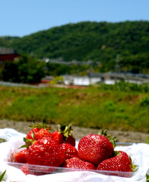 横の田んぼで、入手した「いちご」を記念撮影