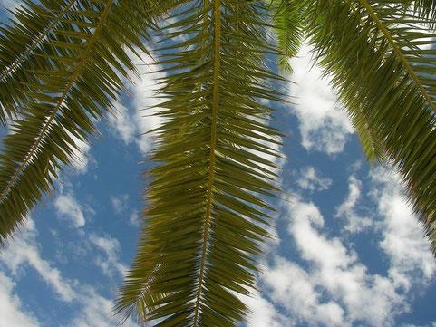 Dutje onder een palmboom