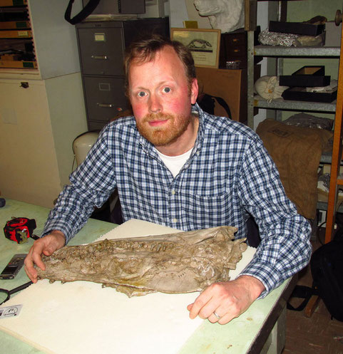 Studying the Styxosaurus snowii holotype