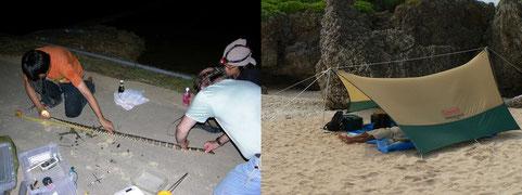 野外調査でアカマタの大きさを測る。地域間の体サイズ変異も興味深い研究テーマのひとつ(左)。無人島で爬虫両生類相を行う。調査の合間にベースキャンプでつかの間の休息をとっているところ。白い砂浜でのキャンプも調査の楽しみのひとつ(右)。