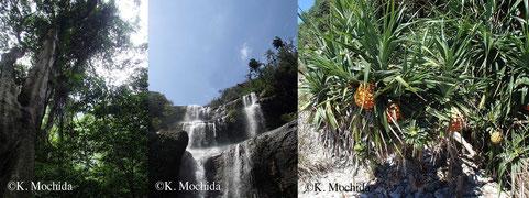 動物の研究と言えど、生息環境の植性を知ることは重要です。屋久島(左)西表島(中)無人島(右)