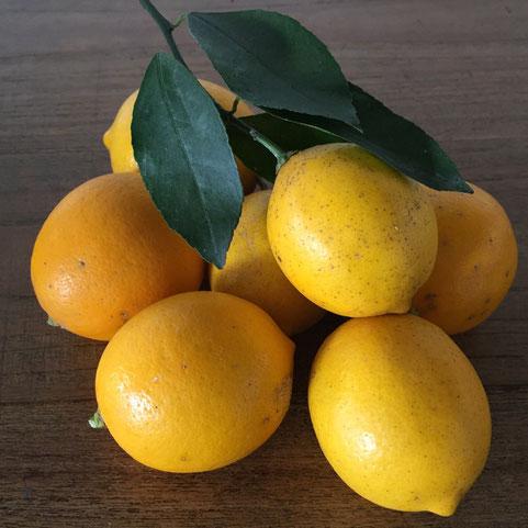 無農薬のレモンをいただいた♪ 我が家はレモン消費率が高いから超うれしい♡ でいただいた方のインスタ見たらレモン狩りの様子が、、、陽射しとレモンが良い感じに写っててまるで南仏♪ マジでうちの庭にもレモン植えようかな?♪