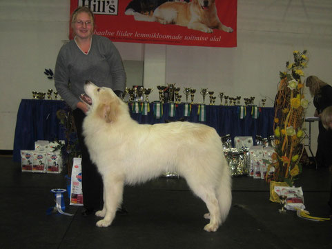Neesu 9 months old JCAC BOB-Junior, BOB & Best in Group 2nd