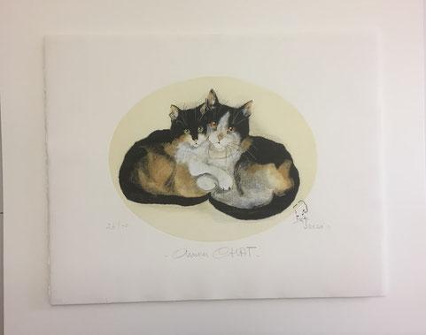 Katzenbild schwebend aufgelegt