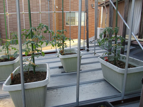 物置の屋根の上が家庭菜園です