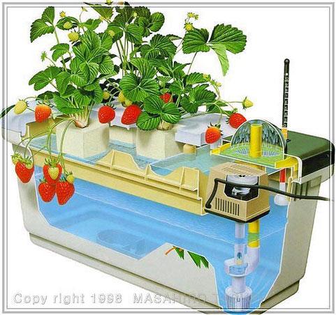 苺の水耕栽培構造イラスト 断面図 テクニカルイラスト