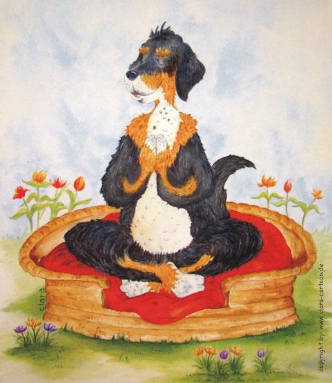 Ein Hund sitzt im Korb auf einem roten Kissen. Der Hund ist entspannt und macht Yoga
