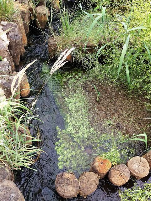 Natuurlijke waterzuinige vistrap te Blerick