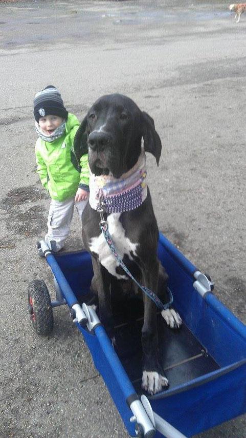 hinreißend - auch Hunde mögen ulfBo