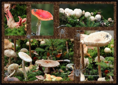 Pilzlehrpfad beim Hubertusfest im Wisentgehege - oben links der Tintenfischpilz
