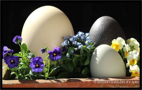 Vogel Strauß, Nandu und Emu Eier, die Frühlingsblüten kommen vom Floristen