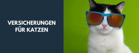 Versicherungen für Katzen