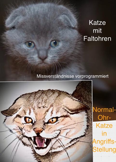 Obern: Faltohrkatze, unten Katze mit normalen Ohren in Angriffsstellung