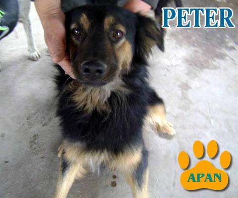 peter perros en adopcion salta