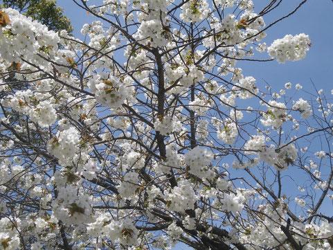 能古島 2013年4月1日
