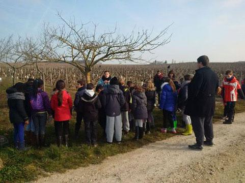 ateliers-5-sens-découverte-vigne-enfants-jeune-public-scolaires-classe-verte-centre-loisirs-vignoble-Vouvray-Touraine-Vallée-Loire-Rendez-Vous-dans-les-Vignes-Myriam-Fouasse-Robert