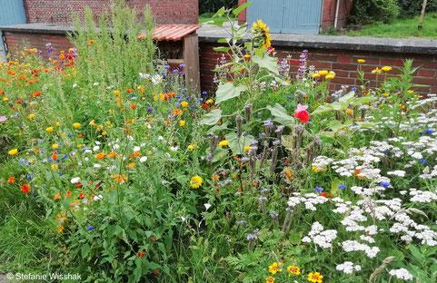 Insektenausgleichsflächen sind nicht nur nützlich, sondern sehen auch noch wunderschön aus!