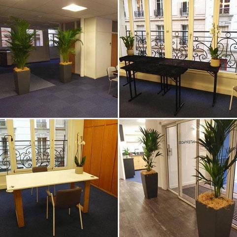 location de plantes pour un événement à Paris