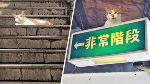 特定一階段(とくていいちかいだん)