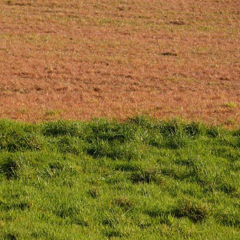 la terre saigne - photographie numérique sur dibond 60x60cm