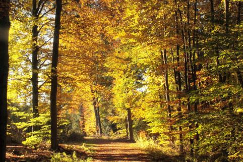 leuchtende Herbstfarben im Wald zwischen Spielberg und Ittersbach