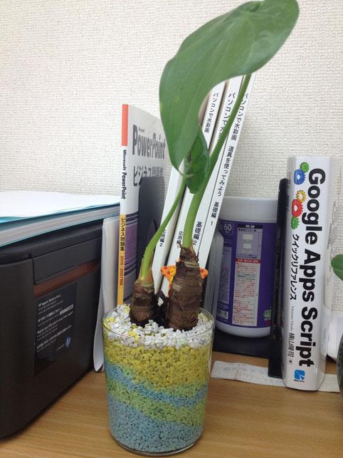 観葉植物1号
