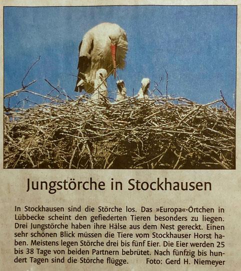 Bericht über unseren Stockhauser Storchenhorst, auf den sich der obige Leserbrief bezieht (Lübbecker Kreiszeitung (Westfalen-Blatt), Lokalteil Lübbecke, 16.05.19)