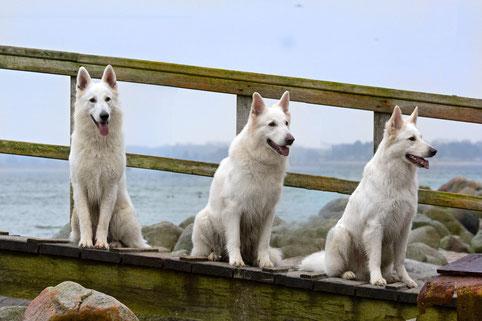 Ben, Rico und Nuki