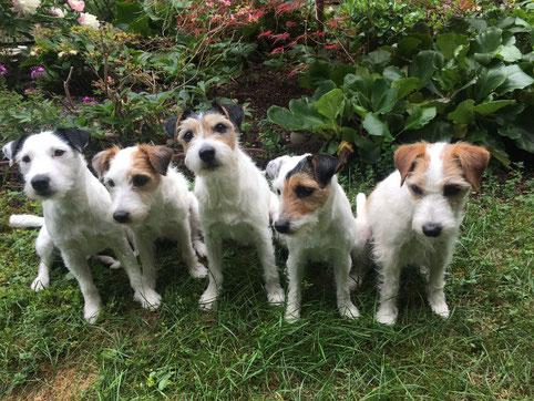 Spencer, Selma, Scotty, Scarlett und Cookie