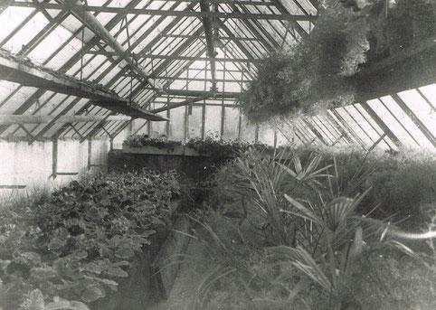 Erd-Glashaus, ca. 1950